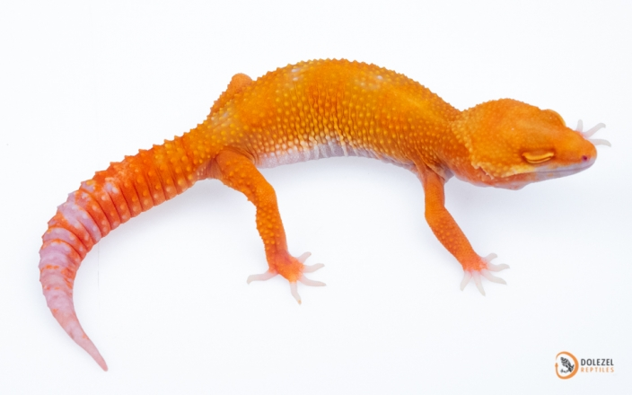 Electric Tangerine Tremper Sunglow